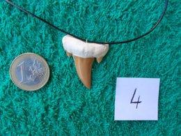 CADEAU  ORIGINAL.DENT DE REQUIN FOSSILE MONTEE EN PENDENTIF.LONGUEUR DU CORDON REGLABLE. - Fossiles