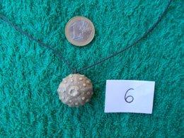 CADEAU  ORIGINAL.OURSIN FOSSILE MONTE EN PENDENTIF.LONGUEUR DU CORDON REGLABLE. - Fossils