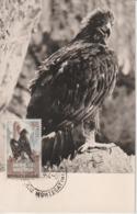 Italie Carte Maximum 1954 Aigle 10ème Anniversaire Résistance 676 - Cartes-Maximum (CM)