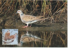 Malte Carte Maximum Oiseau 2001 Tourterelle 1151 - Malta