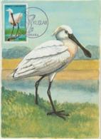 Turquie Carte Maximum Oiseau 1976 Spatule 2176 - 1921-... République