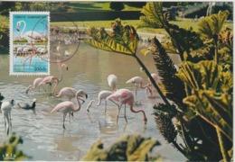 Turquie Carte Maximum Oiseau 1976 Flamants Roses 2178 - 1921-... République