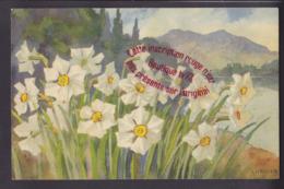 Q1678 - Illustrateur A HALER - Narcisses - Suisse - Haller, A.