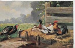 AK 0325  Federvieh Am Bauernhof - Künstlerkarte Um 1920 - Vögel