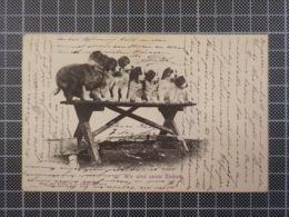 H114) Chiens Dogs Wir Sind Under Sieben Verlag Adamson Davos - Hunde