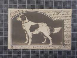 H113) Chien Dog 1902 - Hunde