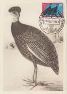 Carte  Maximum  1er  Jour   CONGO  BELGE   PINTADE  DE  SCHOUTEDEN   1963 - Hühnervögel & Fasanen