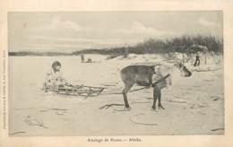 ETATS UNIS ALASKA ATTELAGE DE RENNE - Etats-Unis