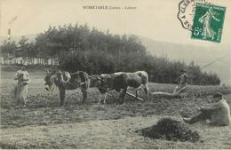 42 Noiretable  Labour  Agriculture Attelage Agraire - Noiretable