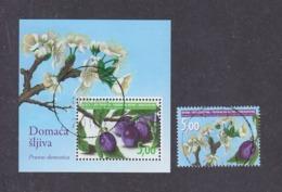 Bosnia And Herzegovina Croatian (Mostar) 2009  Flora Plum Tree Used - Fruit