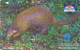 Indonesien - IND 335 Wildlife - Trenggiling - Schuppentier - 75 UNITS - Indonesië
