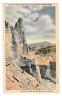 WY Yellowstone Park Osprey Aerie Vtg Haynes Linen Postcard Wyoming 31513 - USA National Parks