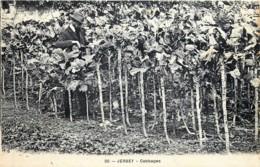 U-K - Jersey -  Cabbages - Edit H.G. Allix N° 20 - Jersey