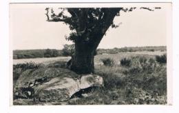 HUN-31   DOLMEN At BORGER ( Hunebed ) - Dolmen & Menhirs