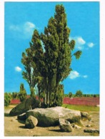 HUN-39   DOLMEN At WILSEDE ( Hunebed ) - Dolmen & Menhirs