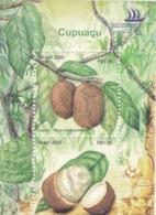 Cupuaçu - The Exotic Flavor Of The Brazilian Amazonia - Fruits