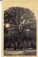 02 - SAINT-GOBAIN - Le Gros Chêne - - France