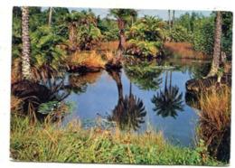 GHANA - AK 361566 Tropical Scenery - Ghana - Gold Coast