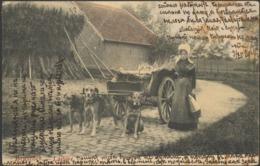 Belgium 1904 - BRUXELLES, LAITIÈRE ATTELAGE DE CHIENS - Flemish Milkmaid & Dog Cart - Ambachten