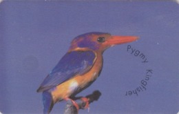 TC PUCE AFRIQUE DU SUD - ANIMAL - OISEAU MARTIN PECHEUR - KINGFISHER BIRD South Africa Chip Phonecard - 4937 - Südafrika