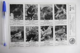 Lot Autocollants Stickers Animaux OISEAUX VOGELS BIRDS UCCELLI - Aufkleber