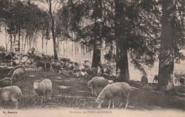 27 Pont Audemer. Berger  Et Moutons - Pont Audemer