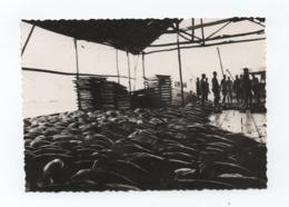 RARE PRIVATE PHOTO Year 1966 BENGUELA - TUNA FACTORY - ANGOLA FABRICA DE CONSERVAS -AFRICA AFRIKA AFRIQUE TUNA FISH THON - Angola