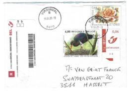 B26 - Belgium - 2005 Viroinval - Stamp Black Stork On Cover - Storchenvögel