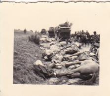 Foto Deutsche Soldaten - Tote Pferde Und Gefallene Soldaten - Fuhrwerke - 2. WK -  5*4cm (43877) - Krieg, Militär