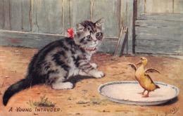 "CHATS   - CHAT Et Canard  "" A Young Intruder ""  Oilette - Katten"