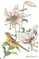 Illustrateur Calvet-Rogniat - Serin Cini - Lis Elégant - Dieren