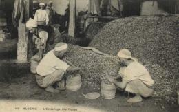 ALGERIE  L'Emballage Des Figues RV - Algérie