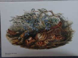Petit Calendrier De Poche 2006 Illustration Oiseau Bécasse  Des Bois - Calendriers