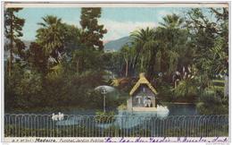MADEIRA FUNCHAL JARDIM PUBLICO 1908 - Madeira