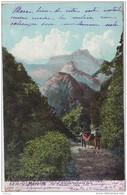 MADEIRA CORRAL GRANDE ROCHE A DE SARA 1908 - Madeira