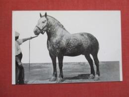 Big Ben World's Largest Prize Winning Gelding >  Ref 3660 - Pferde