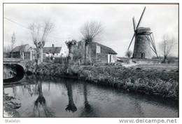 MEETKERKE - Zuienkerke (W.Vl.) - Molen/moulin - Poldermolen Met Scheprad De Grote Molen Voor De Restauratie. - Zuienkerke