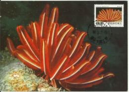 Carte Maximum - Taiwan - Oceanic Creatures - Himerometra Magnipinna - 1945-... Repubblica Di Cina