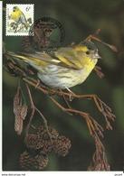 Carte Maximum - Oiseaux - Belgique - Tarin Des Aulnes - Carduelis Spinus - Maximumkarten (MC)