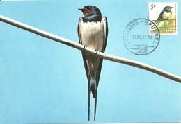 Carte Maximum - Oiseaux - Belgique - Hirondelle De Cheminée - Hirundo Rustica - Maximumkarten (MC)