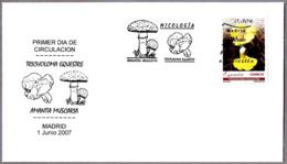 Seta TRICHOLOMA EQUESTRE - Mushroom. SPD/FDC Madrid 2007 - Hongos