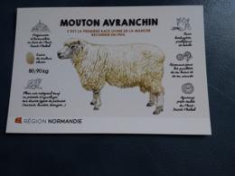 MOUTON AVRANCHIN ORIGINAIRE D AVRANCHES EN BAIE DU MONT ST MICHEL PRES SALES  NORMANDIE - Autres