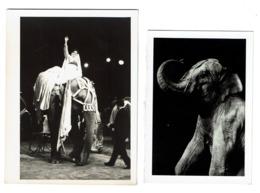 2 Photos - Cirque - Circus - Elephant - 2 Scans - Altri