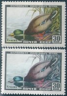 B6424 Russia USSR Fauna Wild Animal Bird ERROR - Ducks