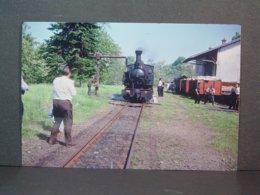POC Locomotive à Vapeur En Gare De Pandrignés Prise D'eau En Juin 1964 Tirage De La Photo En 2006 - Trains