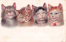 CHATS -  4 Chats - Katten