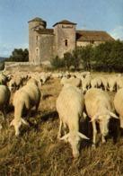 """CPSM Grand Format AU PAYS DES GRANDS CAUSSES  Troupeau De """"Choc"""" Entourant Une Ferme Fortifiée Sur Le Causse RV - Viehzucht"""