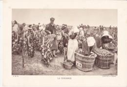 Grande Photo (Phototypie, Héliogravure) - F.M. 56 / LA VENDANGE (Champagne) - Cliché LEVY Et NEURDEIN - Photos