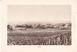 Grande Photo (Phototypie, Héliogravure) - F.M. 55 / AVIZE (Village Champagne, Vigne) - Cliché L. ROTHIER - Photos
