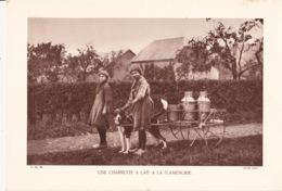 Grande Photo (Phototypie, Héliogravure) - F.M. 86 /  UNE CHARRETTE A LAIT A LA FLAMENGRIE (Chien) - Cliché LEROY - Foto
